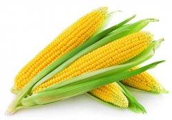 Некоторая информация о кукурузе
